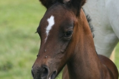 July-09-Tyra-and-Foal-004-small