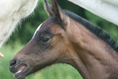 July-09-Tyra-and-Foal-014-small