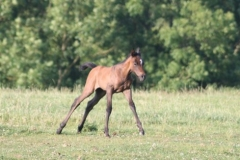 July-09-Tyra-and-Foal-059-small