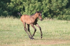 July-09-Tyra-and-Foal-060-small