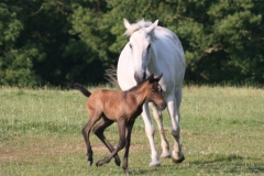 July-09-Tyra-and-Foal-062-small