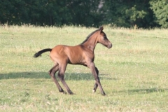 July-09-Tyra-and-Foal-063-small