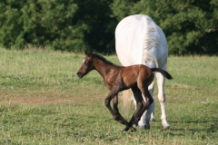 July-09-Tyra-and-Foal-067-small
